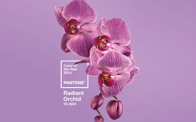 culoarea_anului_radiant_orchid