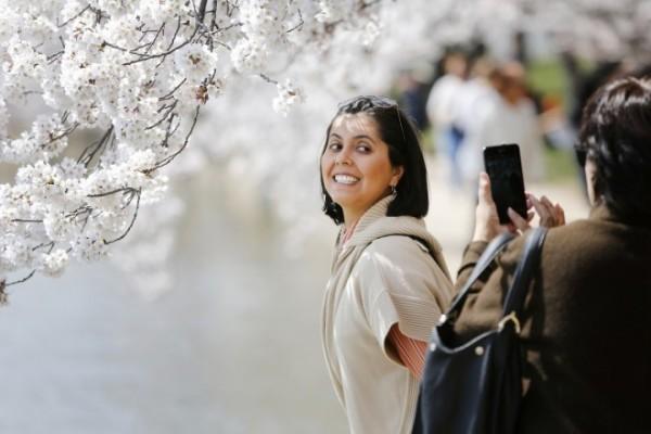 darlene-yarrington-fredericksburg-virginia-has-her-picture-taken-famed-cherry-blossoms-along