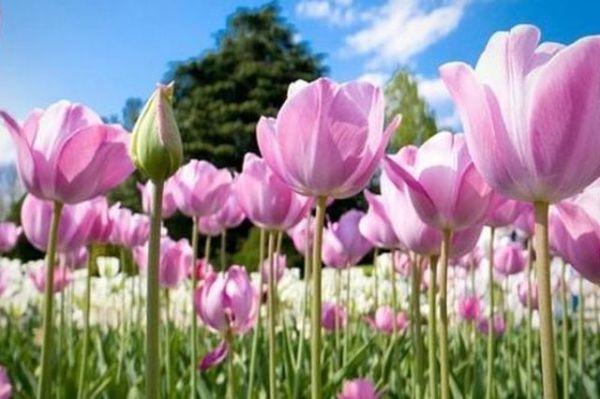 mesaje-florii-urari-florii