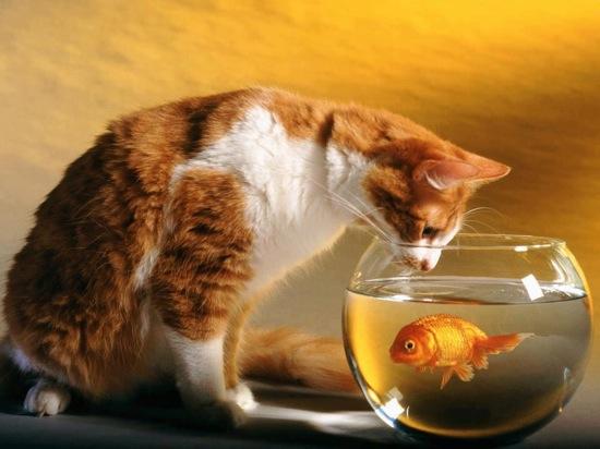 pisica-si-pestisorul