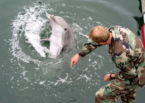russian-navy-acquires-crimeas-combat-dolphins-seals-following-annexation