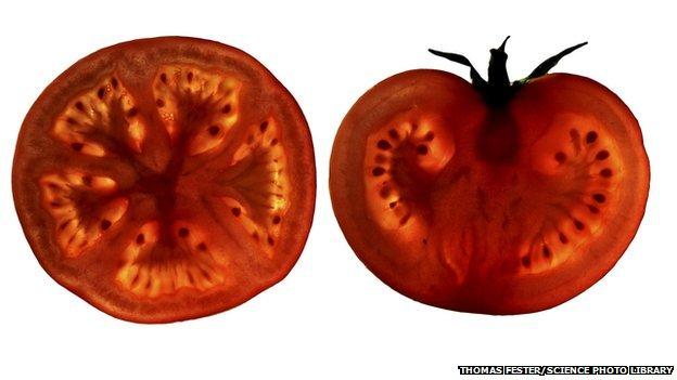 _75397454_tomato_slices-spl-1