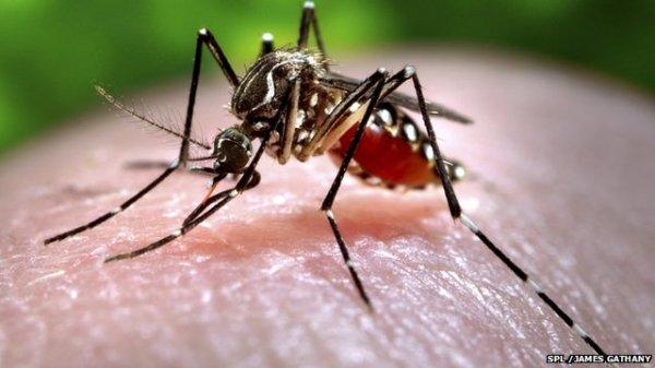 _76184632_c0093043-feeding_mosquito-spl