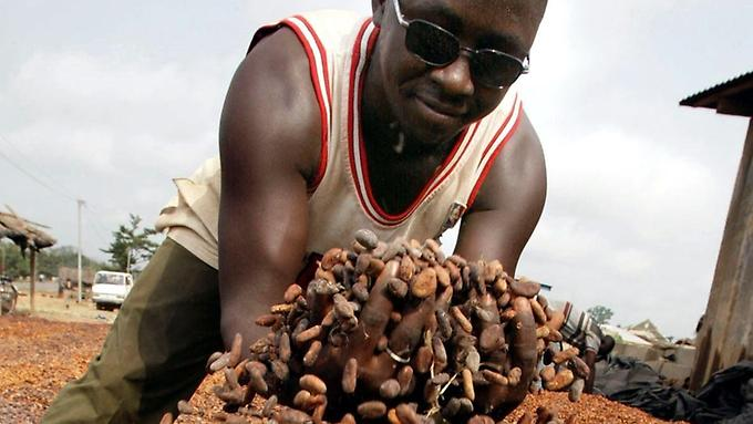 Kakaoanbau