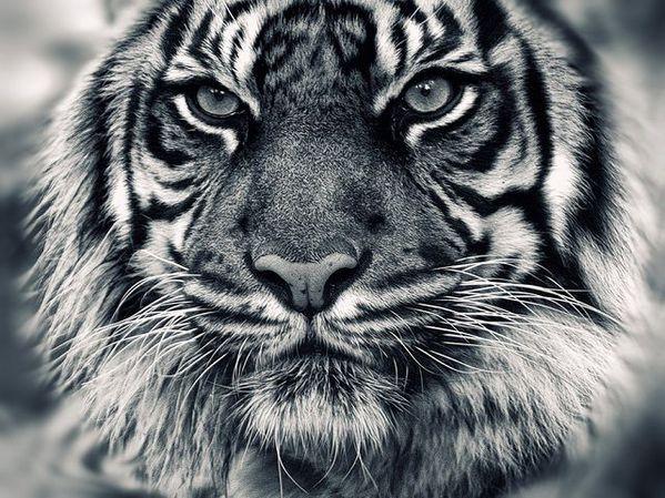 amazing-animal-closeups-640-24