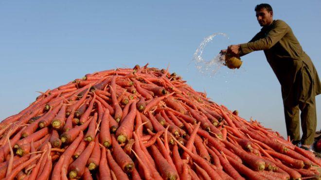 _87308540_farming-carrots
