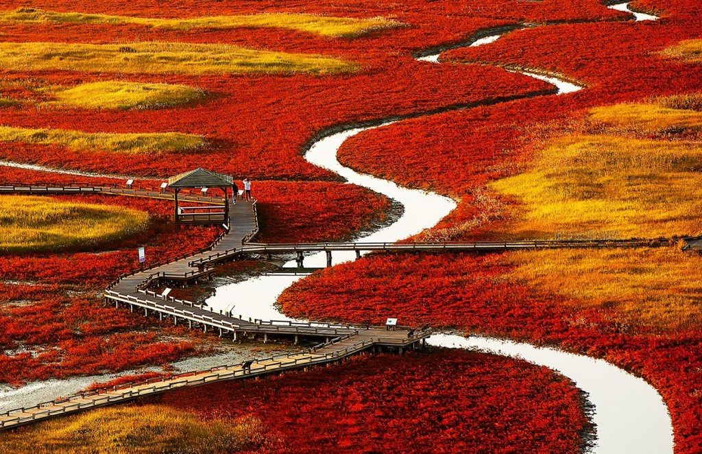 red-filed-korea-1024x662