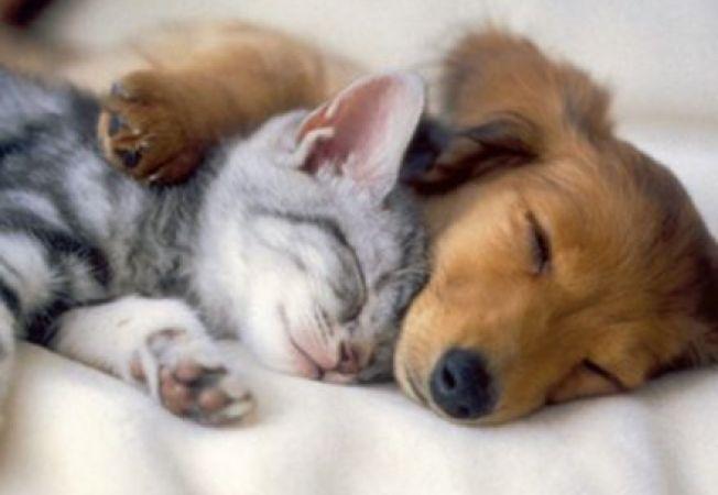 652x450_103771-pisica-versus-caine-care-este-cel-mai-bun-animal-de-companie