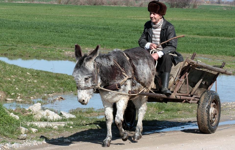 donkey-1241022_960_720
