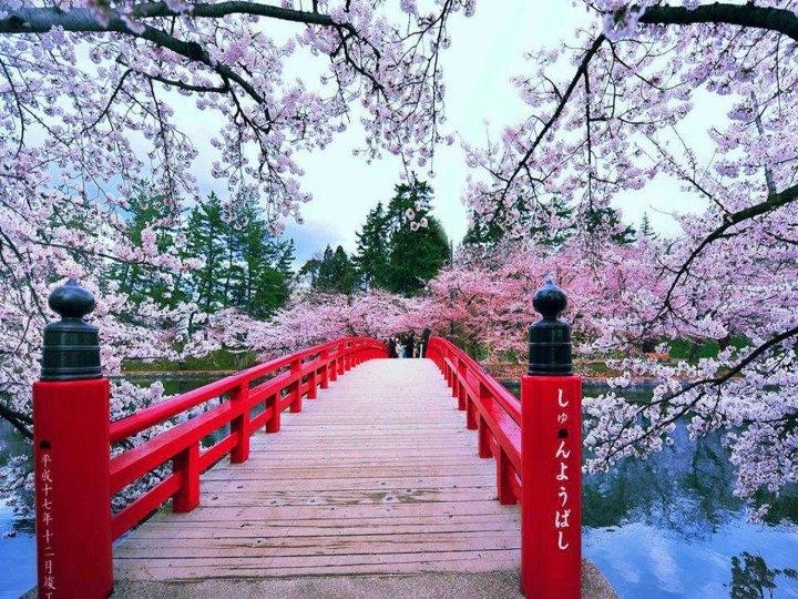 2015-12-japonia-festivalul-ciresilor-1