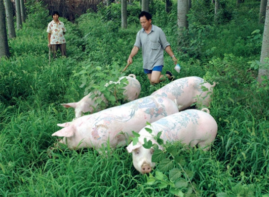 tattooed-pigs6_26738600
