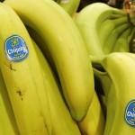 Mega bananierii
