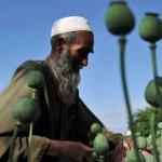 SUA cheltuiește 7 miliarde de dolari pentru a opri cultivarea opiului