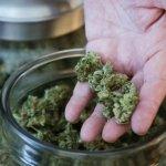 Nebraska și Oklahoma dau în judecată Colorado pentru legea privind marijuana
