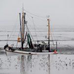 Pescarii din UE primesc instrucțiuni clare