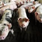 UE vrea să reducă utilizarea de antibiotice