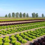 """De """"BUNA VESTIRE"""" se deschid liniile de finantare pentru tineri fermieri si investitii in ferme"""