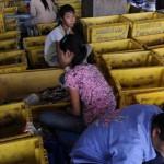 UE ameninţă Thailanda cu interzicerea comerţului de peşte