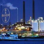 Bayer ajutată de un euro slab