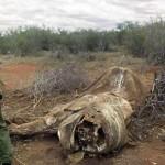 China ar putea salva elefanții și rinocerii