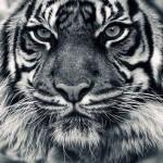 De ochii lumii sau ai animalelor salbatice :-), ori pentru imaginea alegerilor de  anul viitor, deputatii au votat o reducere a TVA  la 5% la carti, acces la muzee, gradini zoo si alte cele….