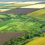 Proiectele in agricultura vor fi accesate mai usor daca fermierii isi comaseaza suprafetele