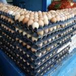 Angola distruge importurile ilegale de ouă