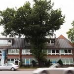 Hamburg vrea să își protejeze mai bine copacii
