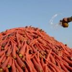 Ţările dezvoltate vor renunţa la subvenţionarea exporturilor agricole