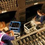 Ucraina consideră ilegală vânzarea de vin din Crimeea