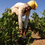 Africa de Sud încheie disputele comerciale cu SUA pentru importurile de pui