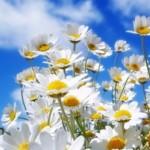 "ANAF-ul, rupt de realitate, la inregistrarea  TVA, va cere in curand si dovada ""florilor de musetel duse la gradinita"" de catre administrator"