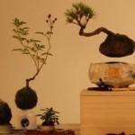 Bonsaiul care pluteaste si danseaza în aer!