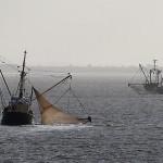 Guvernul federal german vrea să interzică pescuitul în Marea Nordului
