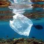 S-a descoperit o bacterie care devorează plasticul