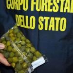 O cantitate record de alimente periculoase pentru sănătate a fost confiscată de Europol