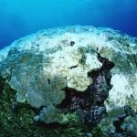 Coralii mor alarmant de rapid