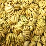 "O ciupercă distruge plantațiile de banane, ""Bananageddon"""