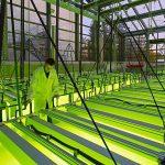 Algele vor putea să alimenteze pe viitor aeronave