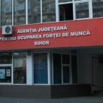 Firmele din Bihor anunţă că ar avea nevoi de muncitori nu de specialişti