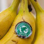 """Oxfam acuză condițiile de pe plantații, """"fructe dulci, adevăruri amare"""""""