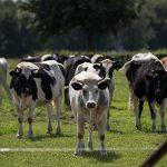 UE oferă fermierilor milioane