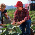 Efectul legii 51%:  Fermierii sunt nemulțumiți că supermarketurile cer discounturi mai mari