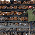 Producătorii chinezi cresc prețurile