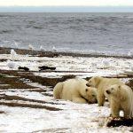 Obama interzice forajele petroliere în Oceanul Arctic