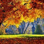 Horoscopul zilei de miercuri 9 noiembrie 2016