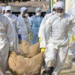 Pericolul de langa noi, Uniunea Europeană a interzis importurile de carne de pasăre din Ucraina din cauza gripei aviare