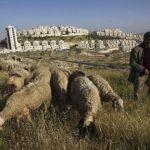 Consiliul de Securitate al ONU amână votul cu privire la coloniile israeliene la cererea Egiptului (surse diplomatice)