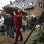 Afacerile cu pomi de Crăciun merg foarte bine