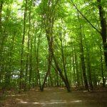 Capacitatea de a absorbi CO2 nu trebuie să fie singurul criteriu pentru conservarea pădurilor